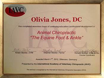 The Equine Foot & Ankle